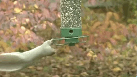 This Bird feeder is definitely Squirrel Proof